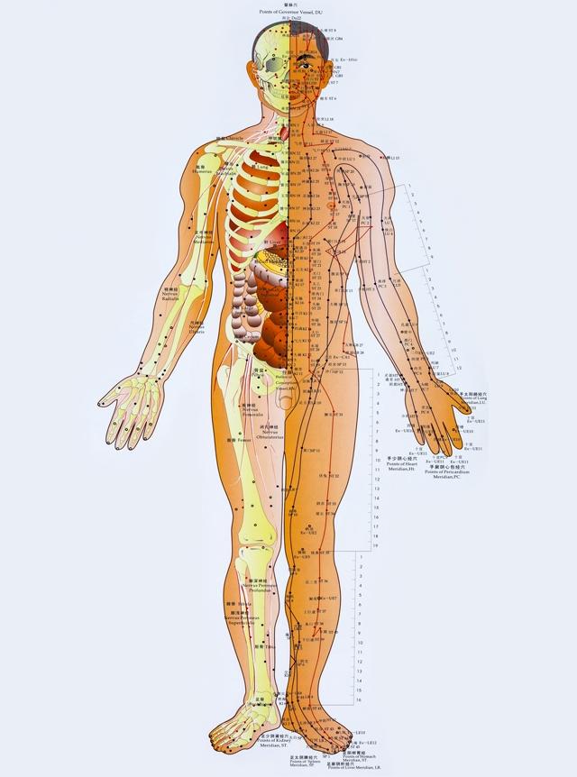 mapa de pontos de acupuntura