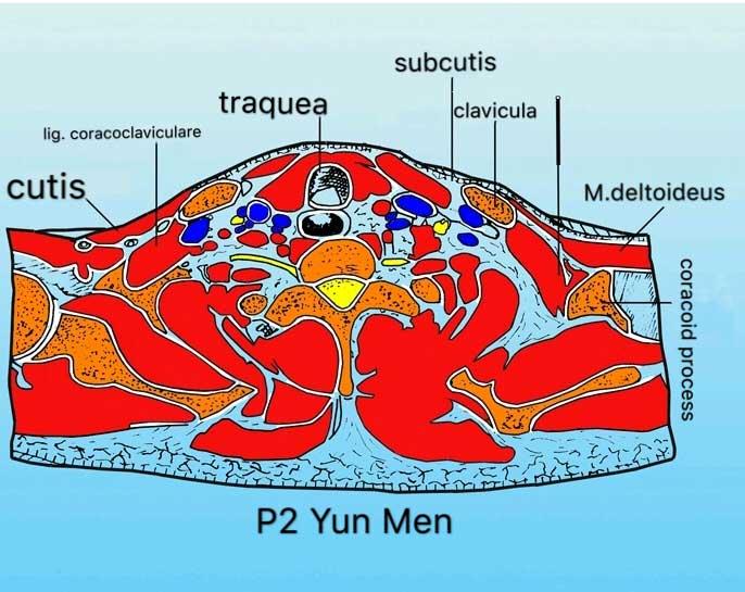 P2 Ponto acupuntura