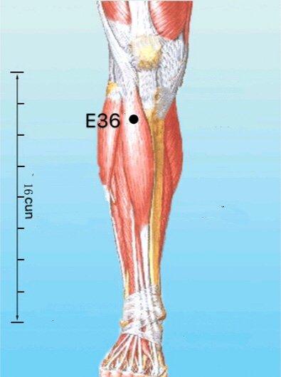 Localização E36 ponto de acupuntura