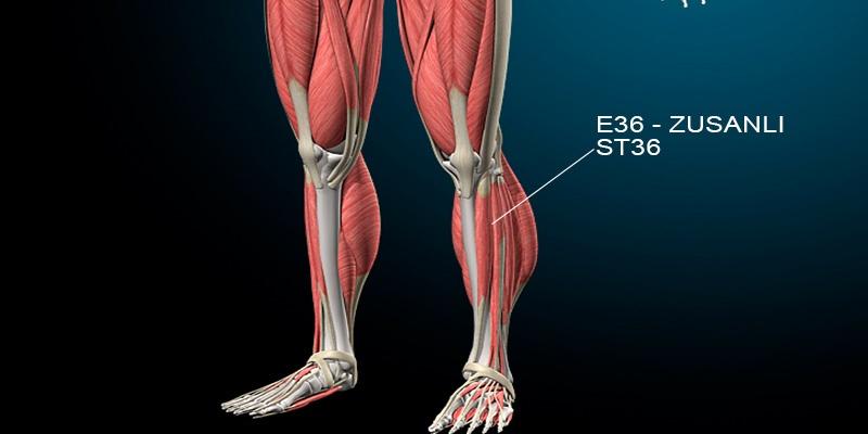 E36 Ponto de acupuntura Definação