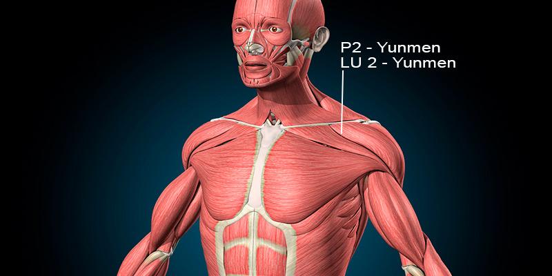 Localização do P2 acupuntura Yunmen