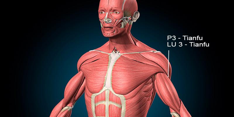 Ponto P3 acupuntura (Tianfu)
