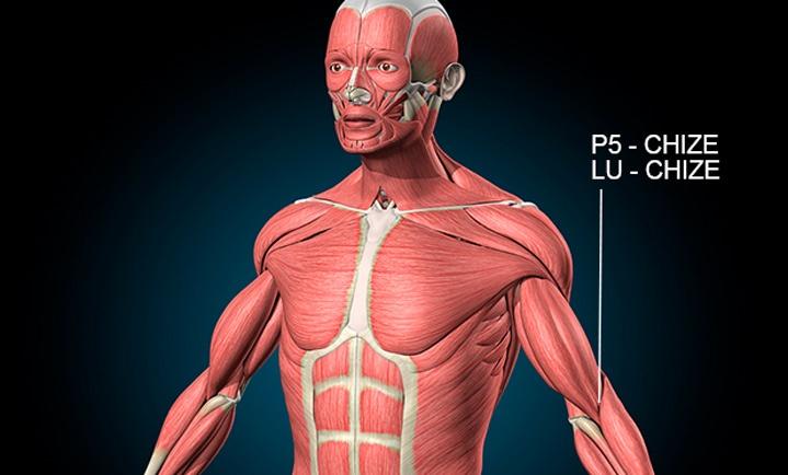 Ponto P5 de acupuntura - Guia de Refêrencia