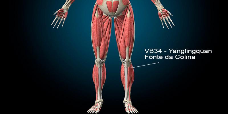 VB34 acupuntura