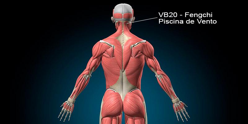VB20 acupuntura