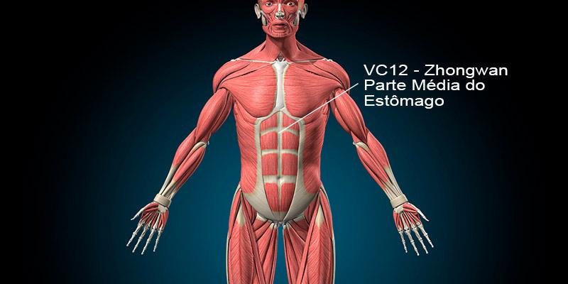 vc12 acupuntura