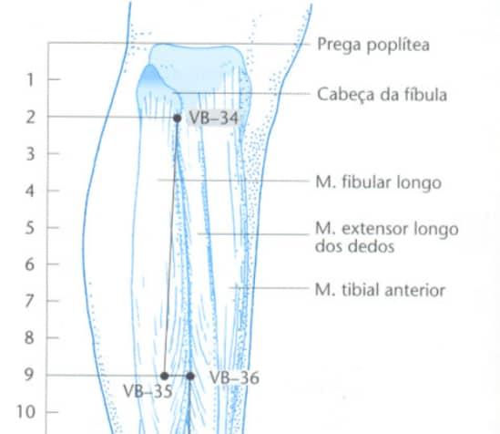 VB34 acupuntura Localização  livro claudia folks
