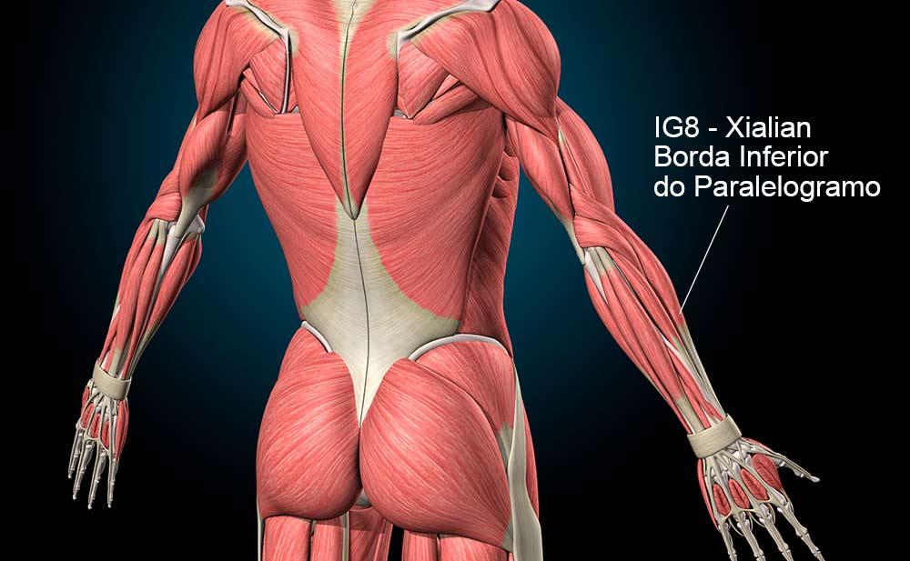 IG1 acupuntura - Vale Circundado