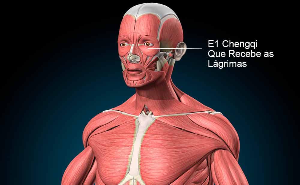E1 acupuntura