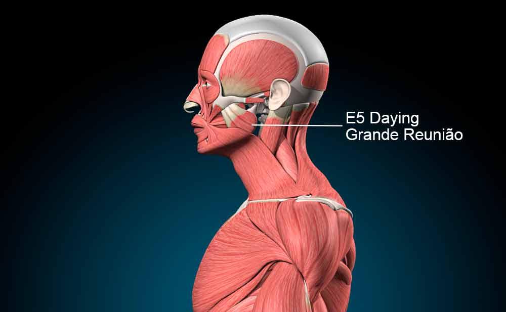 E5 acupuntura