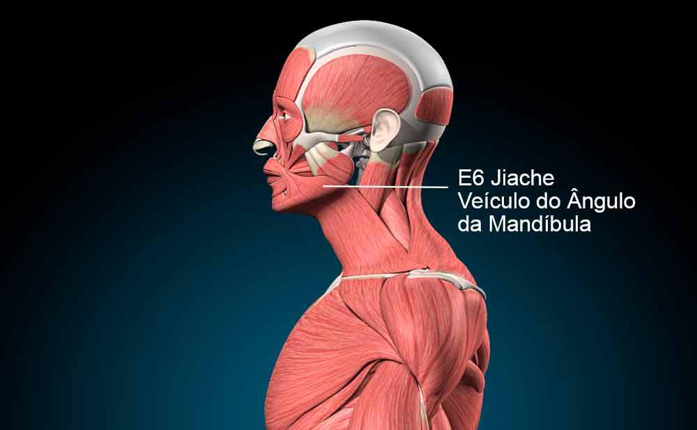 E6 acupuntura