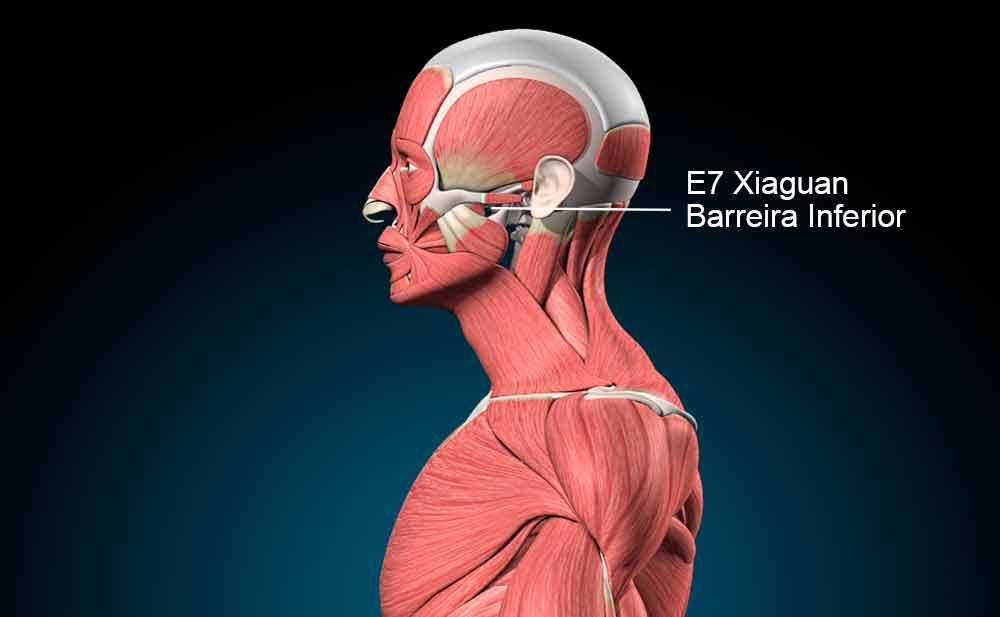 E7 acupuntura
